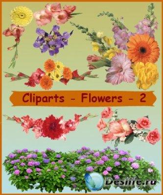 Клипарт для фотошопа - Цветы 2