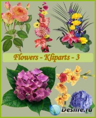 Клипарт - Цветы для украшения 3