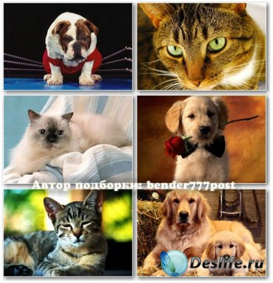 Кошки и собаки сборка №19