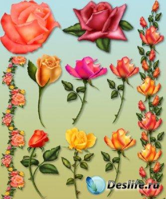 Клипарт цветов - Розы
