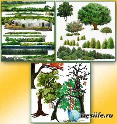 Клипарт для фотошопа - Деревья