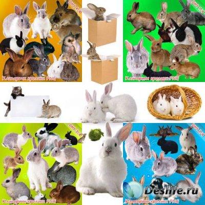 Качественный PNG клипарт - Кролики