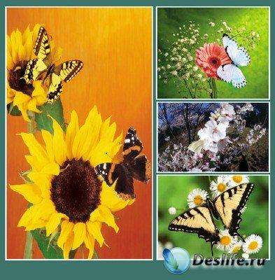Красоты природы (подборка №14 - Сказочная красота в мире бабочек)