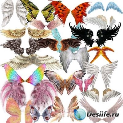 Collection Wings for Adobe Photoshop
