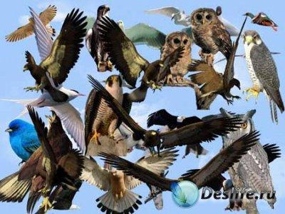 Клипарт - Птицы