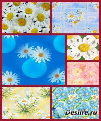 Фоны для фотошопа - Цветы Ромашки