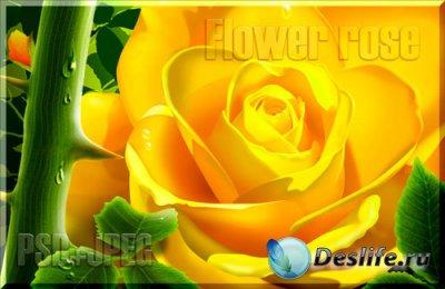 PSD исходник - Flower rose