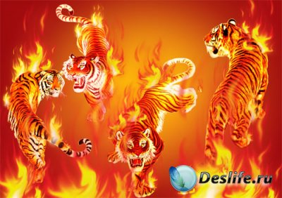 Клипарт в PSD - Fiery tigers