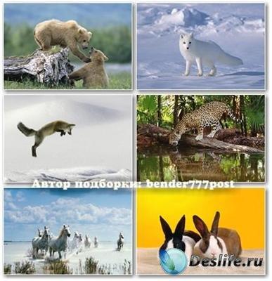 Обои для рабочего стола - В мире животных №7
