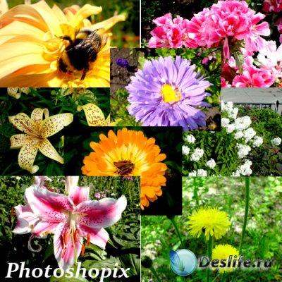Фотографии – Очень красивые цветочки
