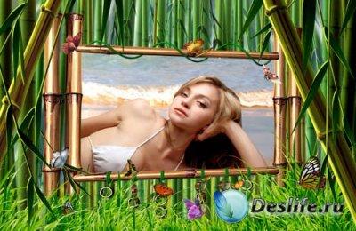 Рамка для фотошопа – Бамбук и бабочки