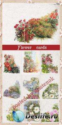 Цветочные рисунки из акварели vol.1