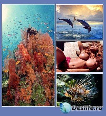 Немного красоты из подводного мира
