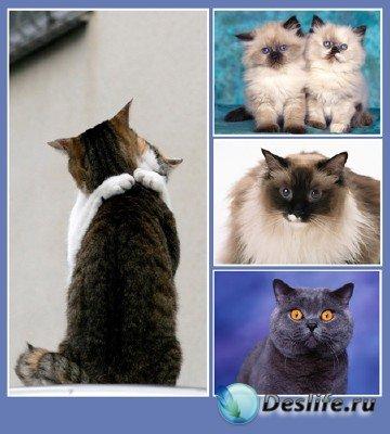Братья наши большие и меньшие - подборка №2 (котята и котяры)