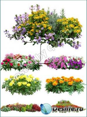 PSD клипарт для фотошопа - Цветы и Растения