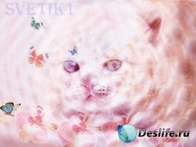 PSD исходник для фотошопа - Киска