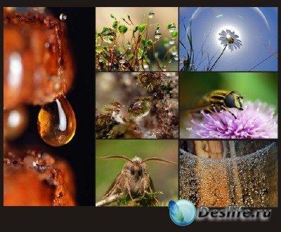 Красоты природы (подборка №15 - Чудеса макросъемки)