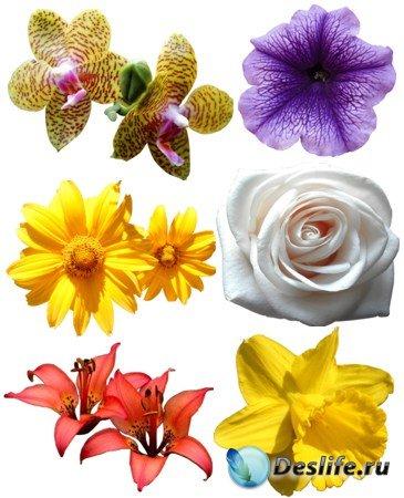 Клипарт для фотошопа - Набор цветов