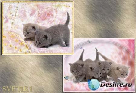 PSD исходник для фотошопа - Киска 4