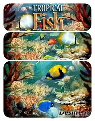 Tropical Fish 3D Screensaver 1.1 Build 6.9
