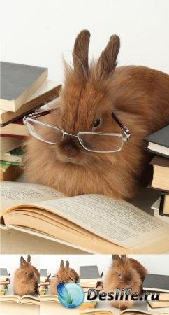 Stock Photos - Читающий кролик (Reading rabbit)