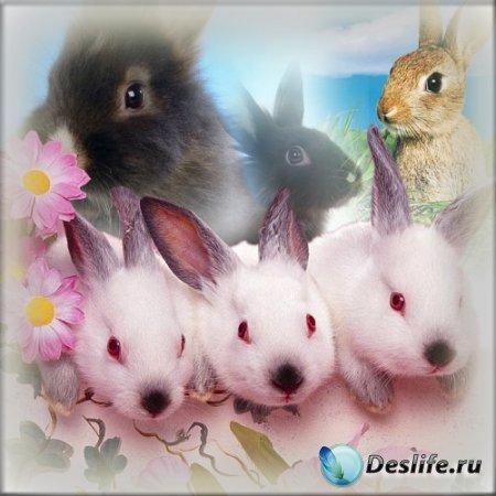 Клипарт - Кролики для нового года