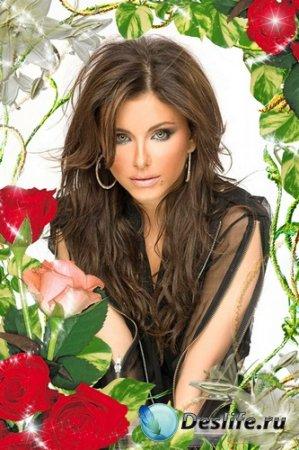Рамочки для оформления фото - Сияние роз