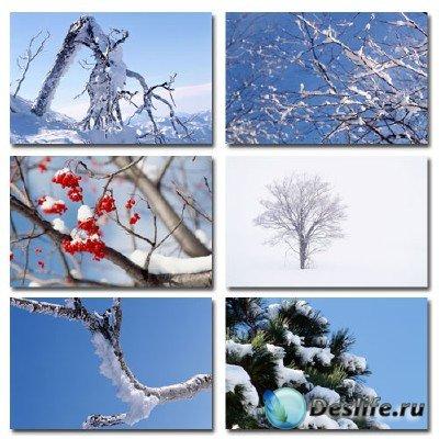 Набор профессионального клипарта Snow And Trees по теме: Деревья в снегу