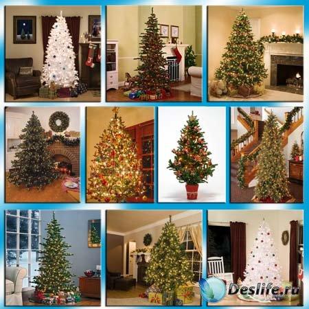 Клипарт - Новогодние елки