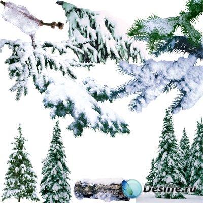 PNG клипарт для фоторабот –  Заснеженные елки и еловые ветки в высоком разр ...