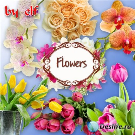 Клипарт в формате PNG (без фона) - Букеты цветов