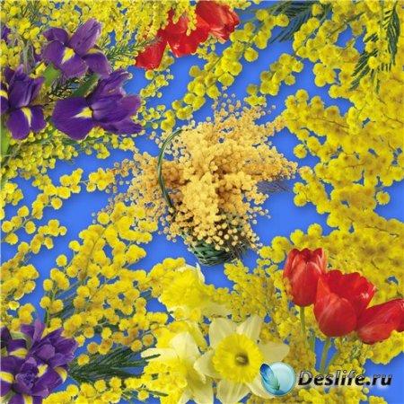 Высококачественный клипарт для фотошопа – Веточки мимозы