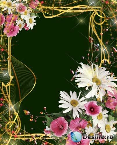 Рамка для фотошопа – Чудесные ромашки