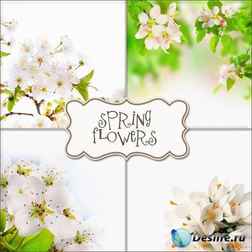 Весенние цветы - Фоны для фотошопа (Spring Flowers #4)