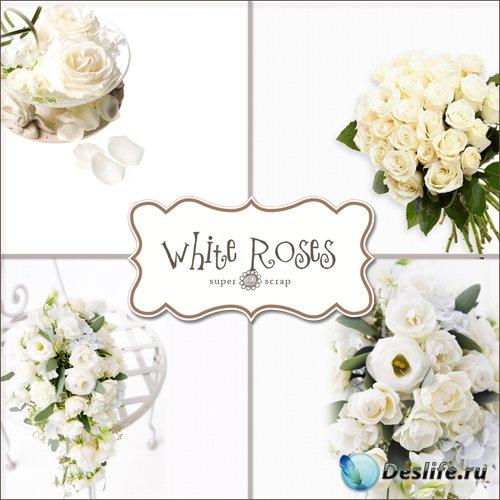 Белые Розы - Фоны для фотомонтажа (White Roses Backgrounds)
