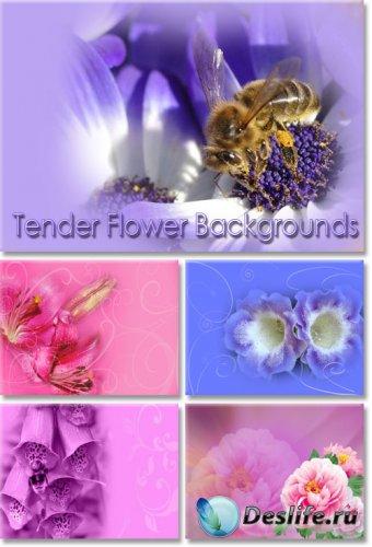 Нежные цветочные фоны для фотошопа
