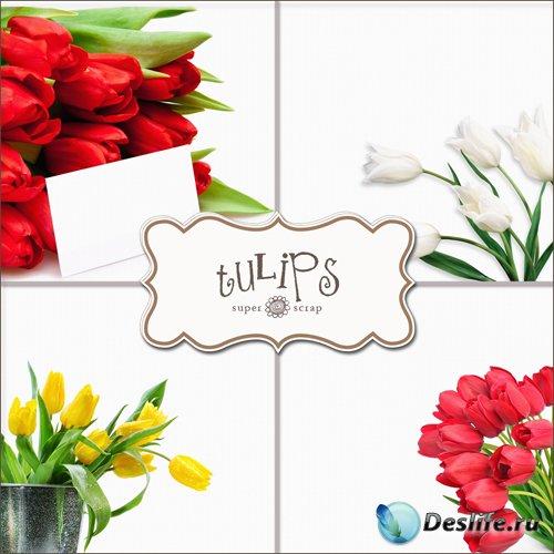 Тюльпаны - Фоны для фотошопа (Textures - Tulips #2)
