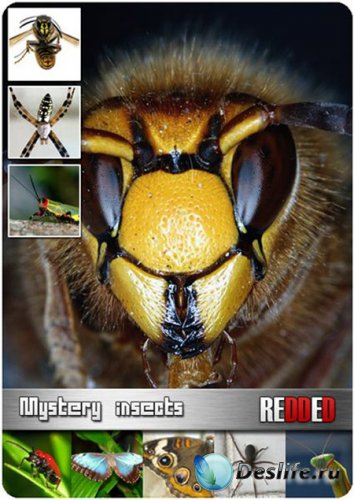 Stock Photo - Mystery insects