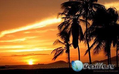 Скринсейвер - Tropical Scenes