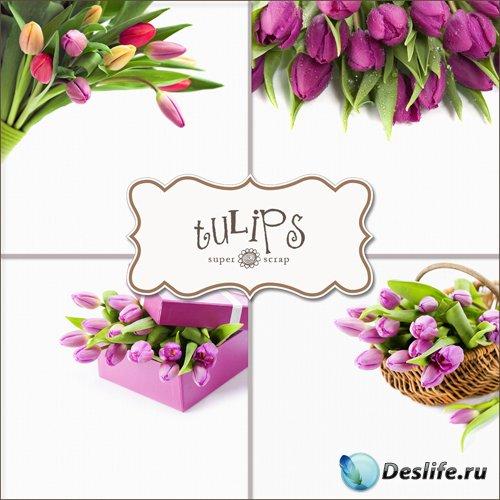 Тюльпаны - Фоны для фотошопа (Textures - Tulips #1)