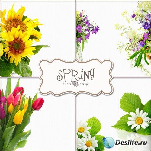 Весенние цветы (Textures - Spring Flowers)