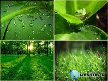 Высококачественные фотографии зелени