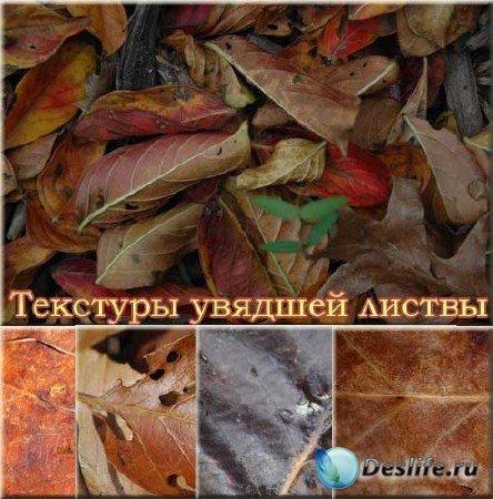 Подборка текстур с увявшими листьями