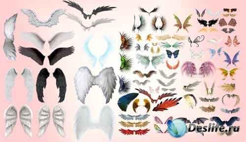 Клипарт - Крылья