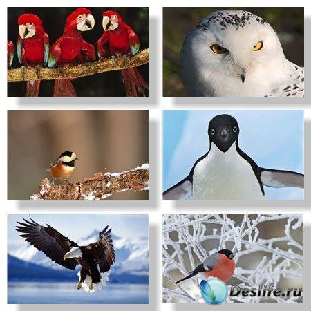 Птицы / Birds. Подборка №1