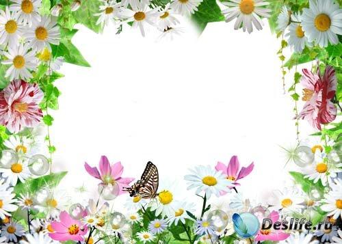Рамка для фотошопа –  Летние ромашки