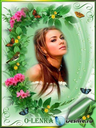 Рамка для фотошопа - Бабочки в цветах