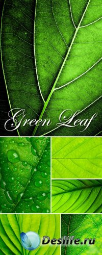Stock Photo - Green Leaf