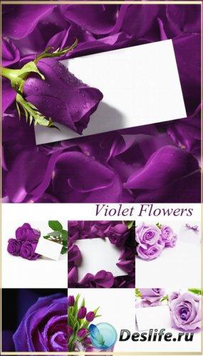 Фоны для фотошопа - Фиолетовые цветы