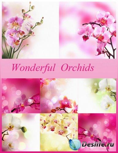 Фоны для фотошопа - Прекрасные орхидеи
